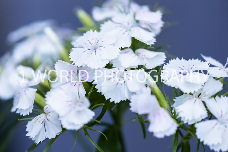 202006112020_6 Spring080--16.jpg