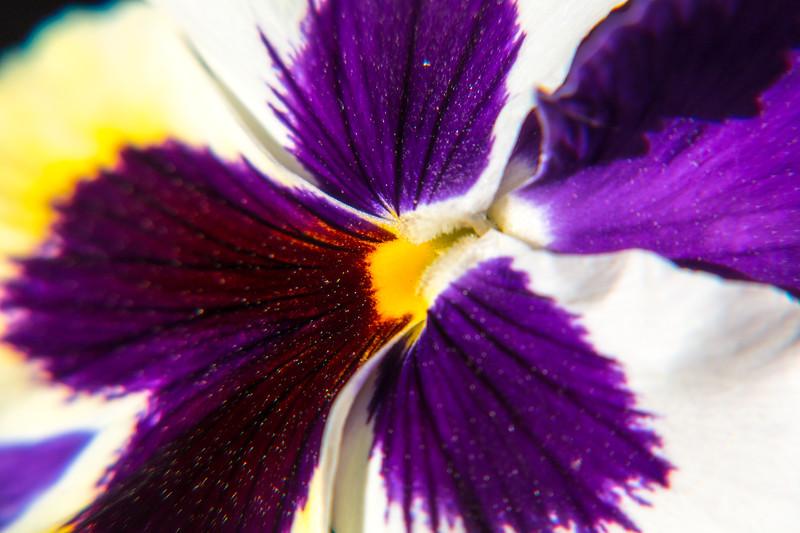 160417_6321 Flowers_26-1.jpg