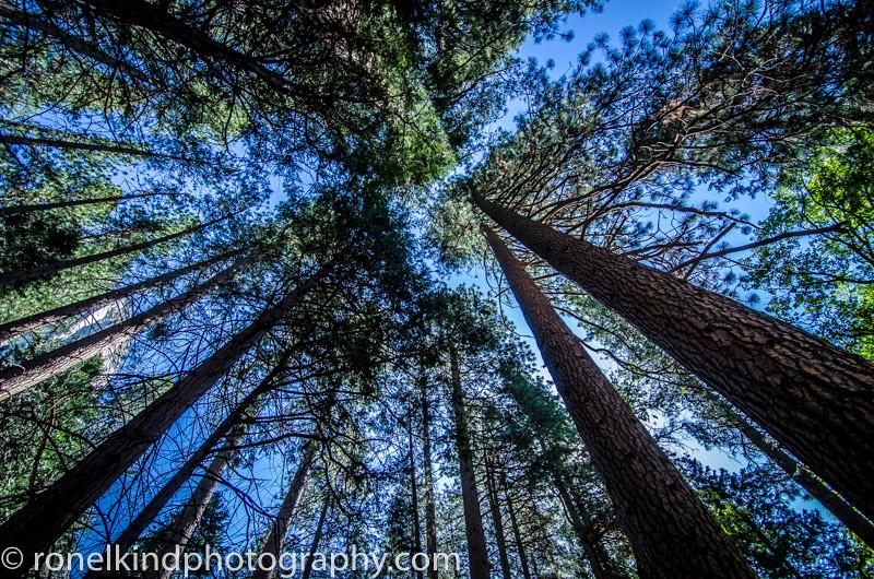 Yosemite-0007.jpg