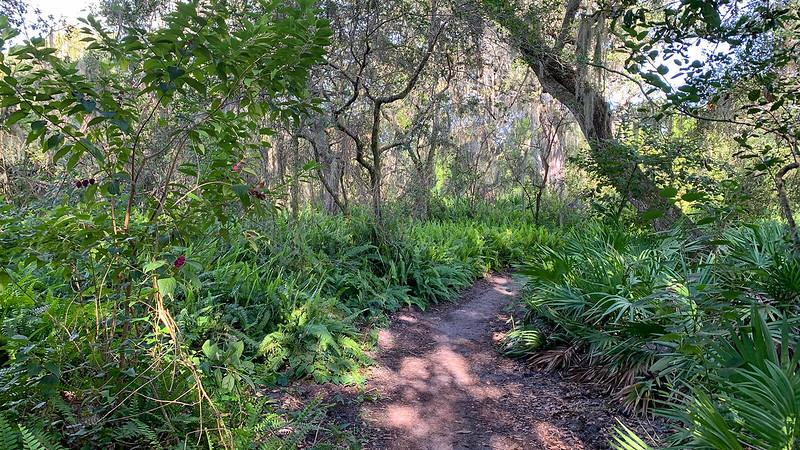 Footpath through ferns