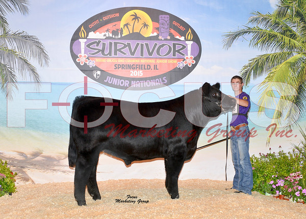 Maine-Anjou & MaineTainer Steer Shows