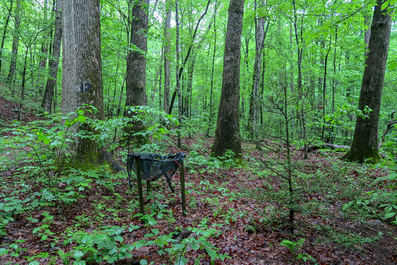 Lower Sidehill Trail -- 2,390'