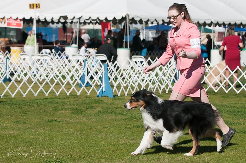 20170205_Australian Shepherds_Lost Dutchman Kennel Club-34.jpg