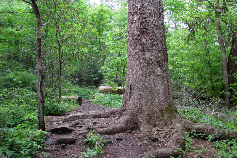 Joyce Kilmer Memorial Loop Trail