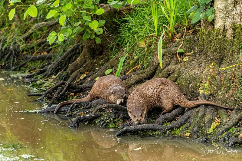 British Wildlife Centre_Z6-7404.jpg