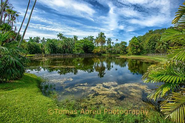 Fairchild Tropical garden - July 2012
