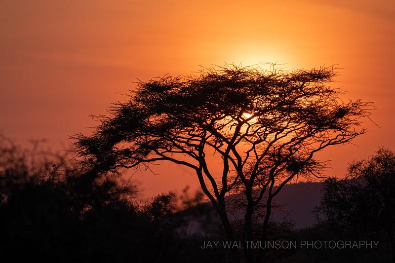 Jay Waltmunson Photography - Kenya 2019 - 123 - (DSCF3355).jpg