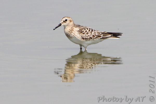 2011-09-11 Riverlands Migratory Bird Sanctuary