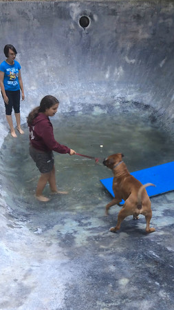 Buster in pool 7/17/16