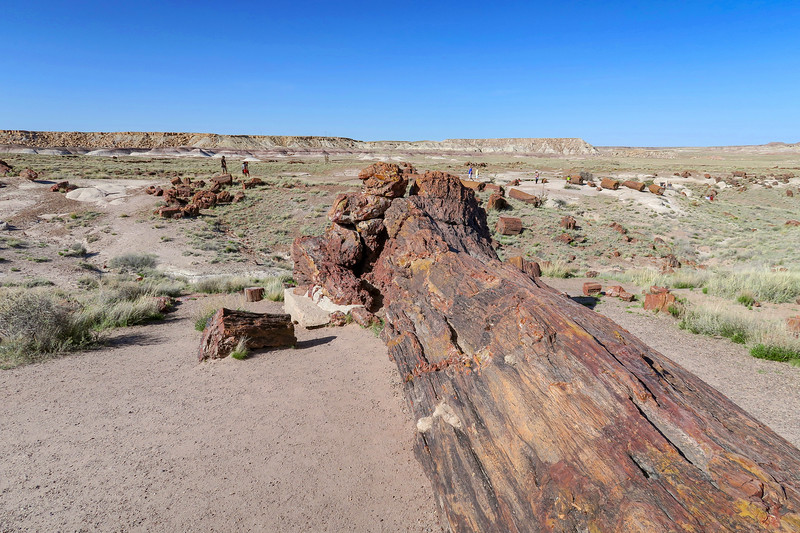 Petrified Forest National Park -- Giant Logs Trail (4-15-17)