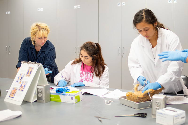 Adjunct Lab Instructor Kelsey Fischer guides students during a pig dissection lab. Monday June 25 in the Center for Instruction labs.