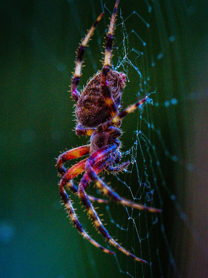 小蜘蛛,天罗地网