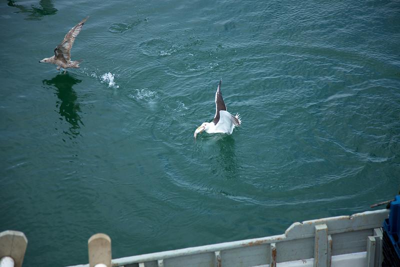Cape Cod 2011 89.jpg