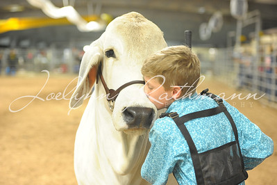 Junior Heifer Showmanship