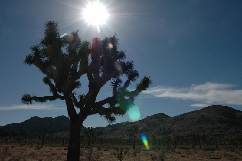 Joshua Tree and Saguaro National Park 2007/12/27-2008/01/01