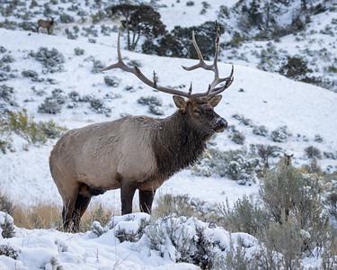 2019 Yellowstone Wildlife Safari