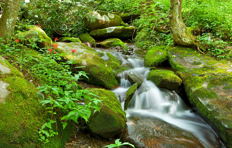 Roaring Fork stream scenic 1, Great Smoky Mountains