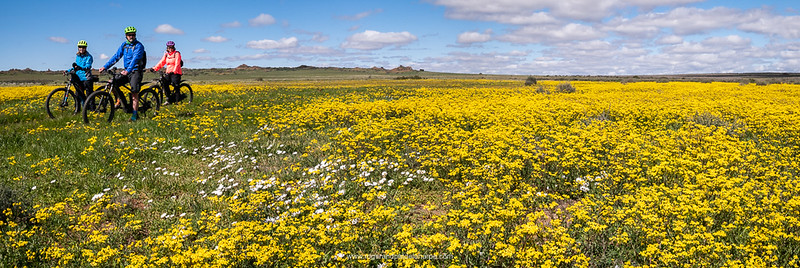 Some 80+ species of plant, out of a total of more than 1 350 different types of flowers, are endemic to the Bokkeveld Plateau, and many of them can be seen here in the Gardens.