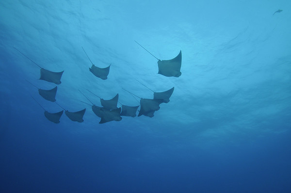 Rays and Fish of Cabo