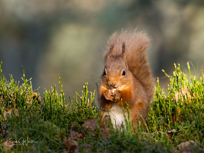 Red Squirrel Boot Camp
