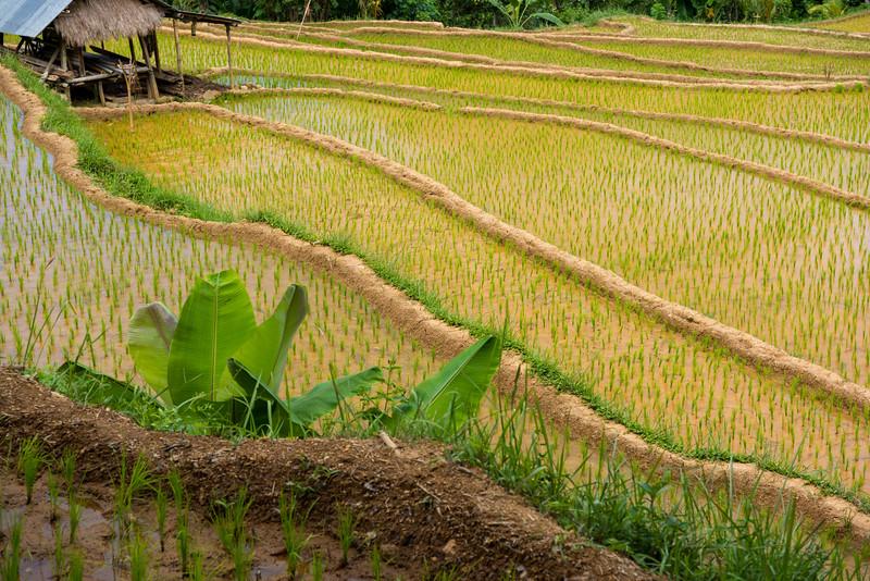 160222 - Bali - 3590.jpg