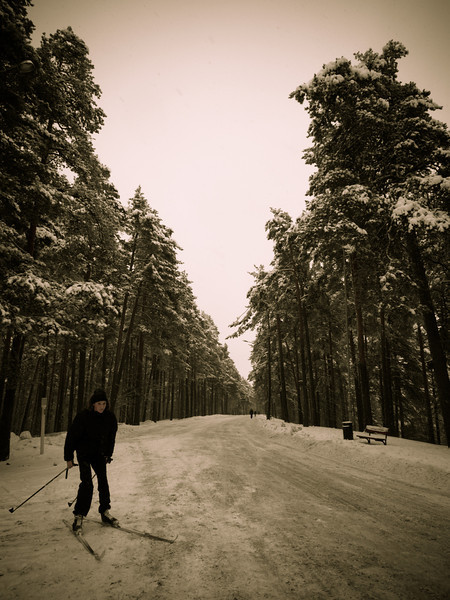 tampere forest skiier.jpg