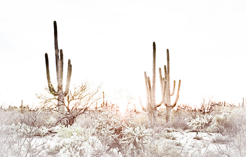 20160315KW_LN_Saguaro Park Sunset-Edit.jpg