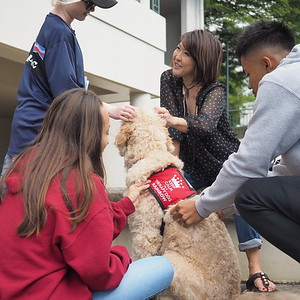 208 Therapy Dogs on Campus