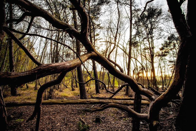 Barnim forest
