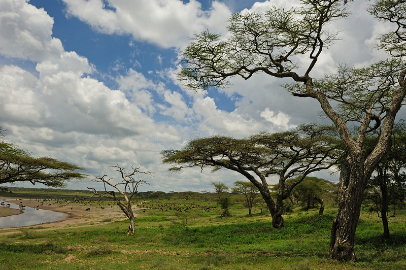 Woodlands in Ndutu, Ngorongoro conservation area in north Tanzania