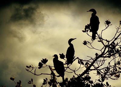 Nature (Birds Only) Class A