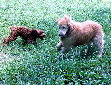 TAMBO & DOG PLAY 07.08.03