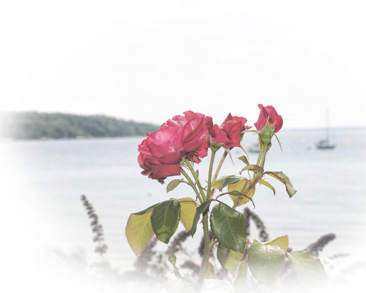 071 Michigan August 2013 - Flower By Shore (Wine Tour) JibzPencilArt.jpg
