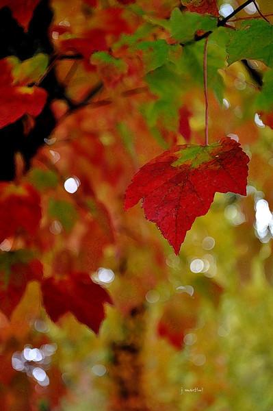 fall colors 10-30-2010.jpg