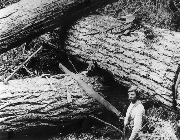 Log Bucker