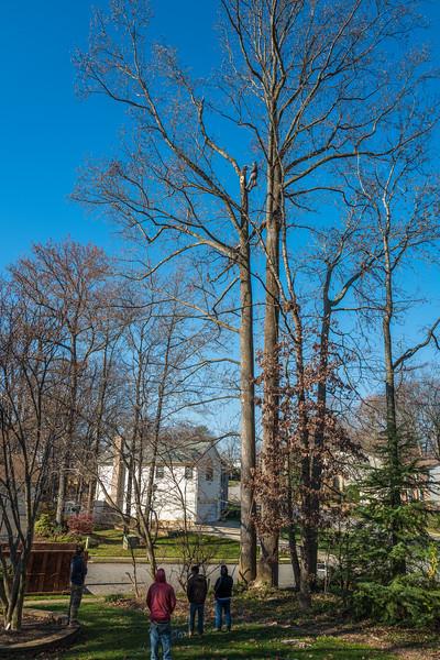 Tree-32.jpg