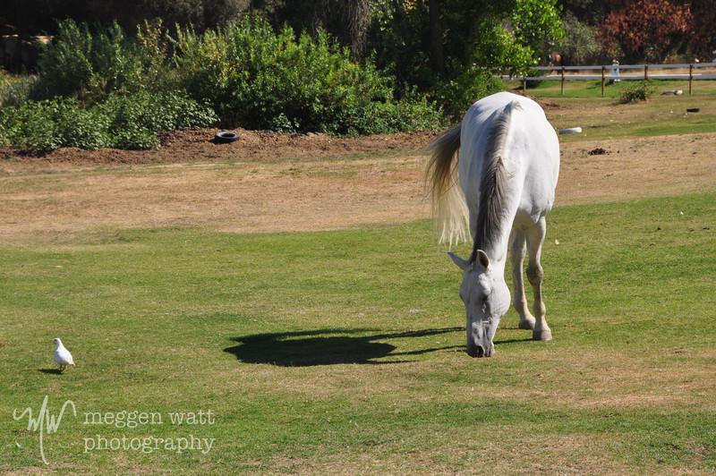 EB&Horses-060.jpg