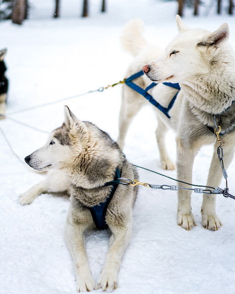 Dogsledding Good Times Day-11.jpg