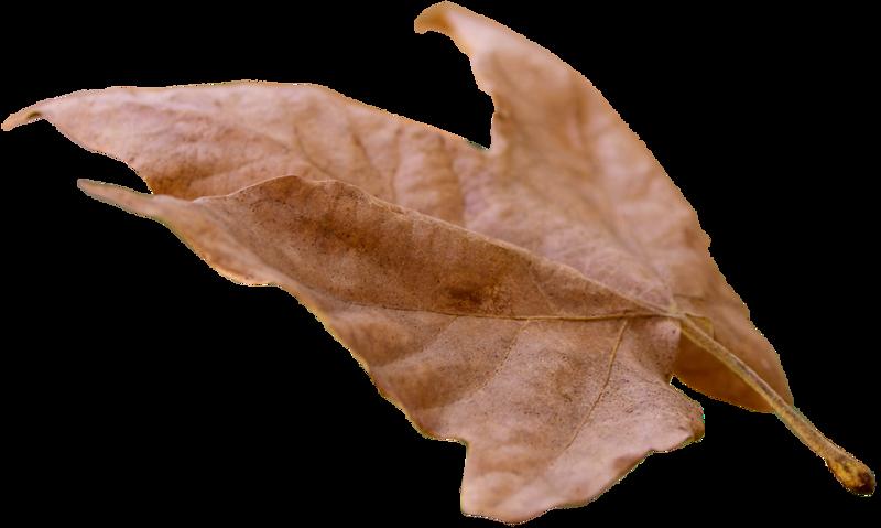 Leaf 24.png