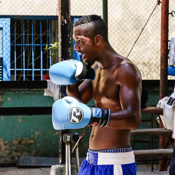 Blue Boxer