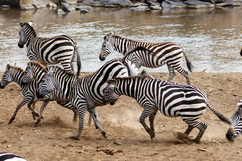 Kenya 2015-03966.jpg