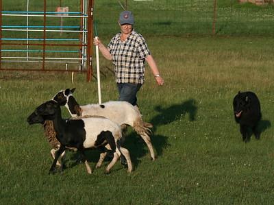 Herding Practice 2015