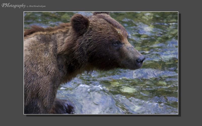 My Alaska 12-08-123.jpg