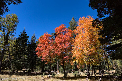 2017 Fall Colors, Mogollon Rim, Arizona