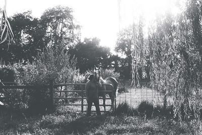 Marissa and Horses