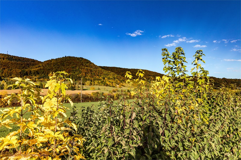 2016-10-22 Herbststimmung Aargau 0U5A1403.jpg