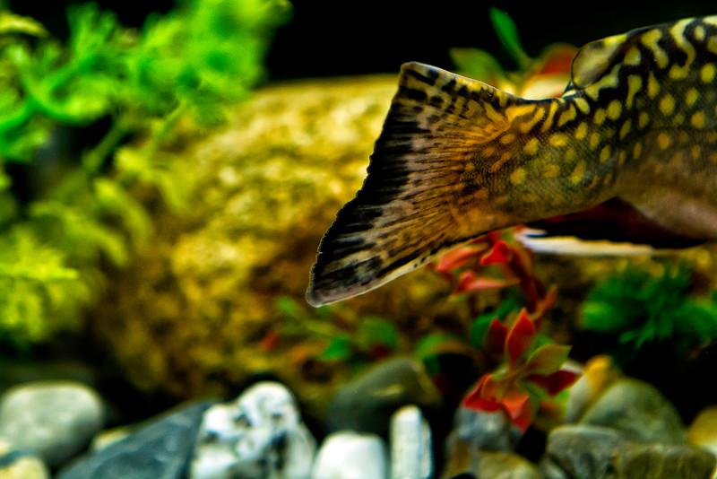 Vermont_Aquarium LC_21.jpg