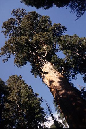 1995 - California National Parks