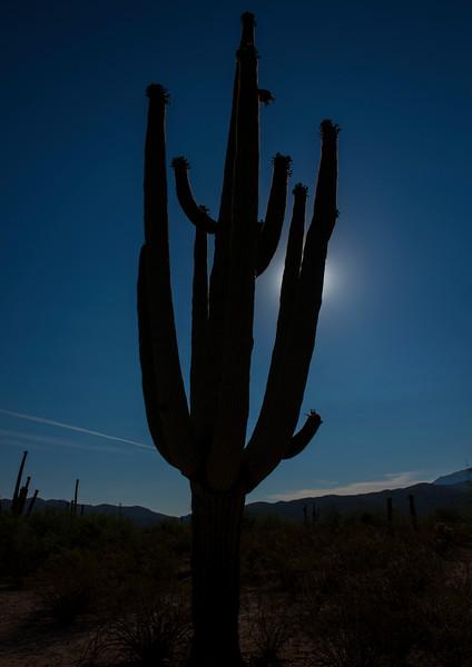 Arizona_090617_1029.jpg