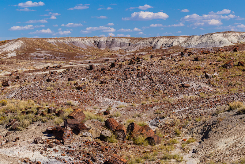 Petrified wood scattered across the badlands in the Crystal Forest